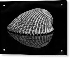Seashell Study Acrylic Print