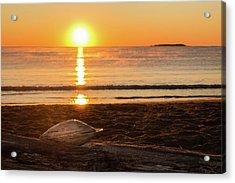 Acrylic Print featuring the photograph Seashell Sunrise by Kirkodd Photography Of New England