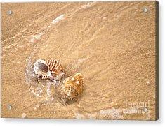 Seashell Turbulence Acrylic Print by Kaye Menner