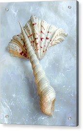 Seashells #2  Acrylic Print by Louise Kumpf
