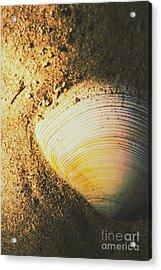 Seashells And Beach Colours Acrylic Print