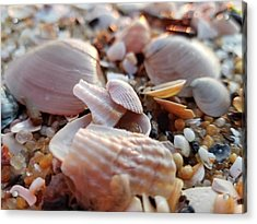 Acrylic Print featuring the photograph Seashells And Pebbles by Robert Banach