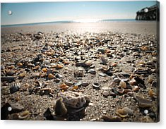 Seashells By The Seashore Acrylic Print