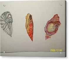 Seashells By The Seashore Acrylic Print by Nancy Caccioppo