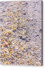 Seashells In Sanibel Island, Florida Acrylic Print