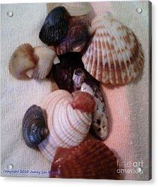 Seashells Acrylic Print by Jamey Balester
