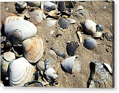 Acrylic Print featuring the photograph Seashells by John Rizzuto