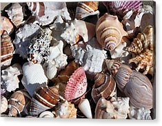 Seashells Acrylic Print by Kristin Elmquist
