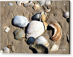 Acrylic Print featuring the photograph Seashells On The Beach by John Rizzuto