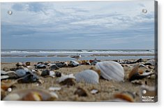 Acrylic Print featuring the photograph Seashells Seagull Seashore by Robert Banach