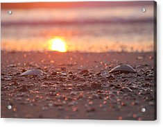 Seashells Suns Reflection Acrylic Print