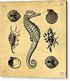 Acrylic Print featuring the digital art Seashells Vintage by Edward Fielding