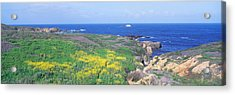 Seashore Along Highway 1 In Spring Acrylic Print by Panoramic Images