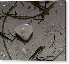 Seashore Treasures In White Acrylic Print
