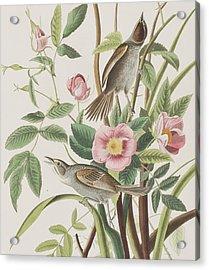 Seaside Finch Acrylic Print