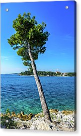 Seaside Leaning Tree In Rovinj, Croatia Acrylic Print