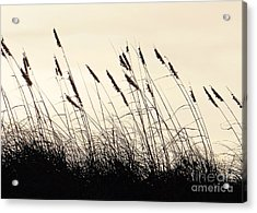 Seaside Oats Acrylic Print by Joy Hardee