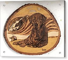 Acrylic Print featuring the pyrography Seaside Sam by Denise Tomasura