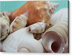 Seaside Seashells Acrylic Print