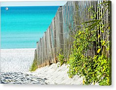 Seaside Wildflower Sand Fence Acrylic Print