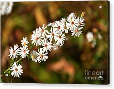 Season Delights Acrylic Print by Adrian LaRoque