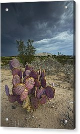 Season Of The Storm Acrylic Print by Sue Cullumber