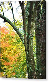 Seasons Acrylic Print by Trudi Southerland