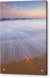 Seastar Sunrise Acrylic Print