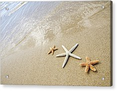 Seastars On Beach Acrylic Print