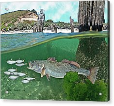 Seatrout Attack Acrylic Print by Alex Suescun