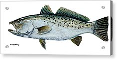 Seatrout Acrylic Print