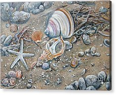 Seaweed And Shells Acrylic Print by Val Stokes