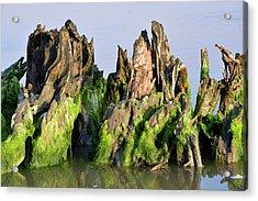 Seaweed-covered Beach Stump Acrylic Print by Bruce Gourley