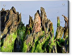 Seaweed-covered Beach Stump Mountain Range Acrylic Print by Bruce Gourley