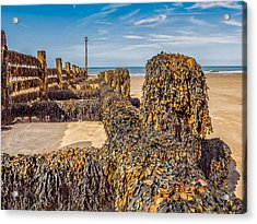 Seaweed Covered Acrylic Print