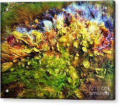 Seaweed Grunge Acrylic Print by Todd Breitling