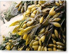 Seaweed Acrylic Print by Mary Haber