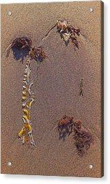Seaweed On Clayhead Beach Acrylic Print by Todd Breitling