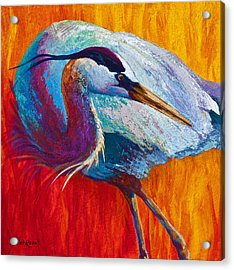 Second Glance - Great Blue Heron Acrylic Print by Marion Rose