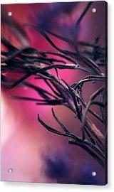 Secret... Acrylic Print by Arthur Miller