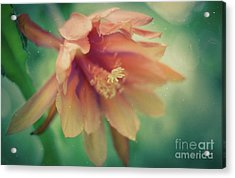 Acrylic Print featuring the photograph Secret Garden by Ana V Ramirez