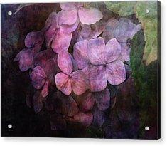 Secret Hydrangea 1538 Idp_2 Acrylic Print
