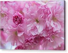 Secret Life Of Flowers Acrylic Print