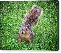 Secret Squirrel Acrylic Print by Kyle West