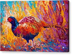 Secrets In The Grass - Pheasant Acrylic Print