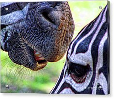Acrylic Print featuring the photograph Secrets by Traci Cottingham