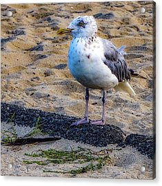 Acrylic Print featuring the photograph See The Gull by Kendall McKernon