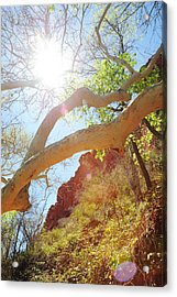 See The Light Acrylic Print by Kate Livingston