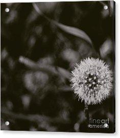 Seed Cycle Acrylic Print