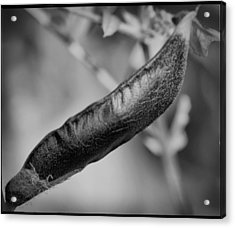Acrylic Print featuring the photograph Seed Pod by Keith Elliott